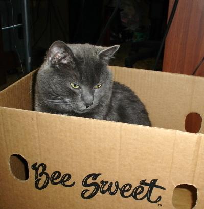 bee_sweet