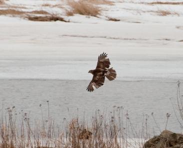 bird_ofprey