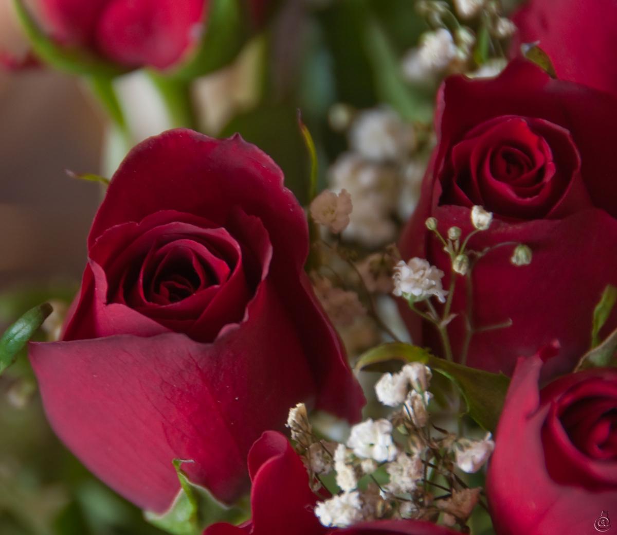 roses_stval